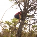 Anthony climbing a tree to get a better view