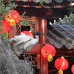 Birds inside the Chinese Garden