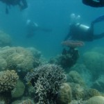Diving the barrier reef