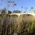 Tall grass and bridges